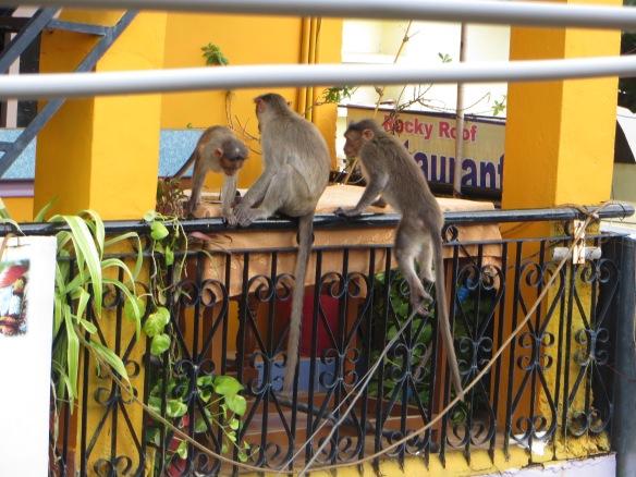 Nuestros vecinos en Hampi