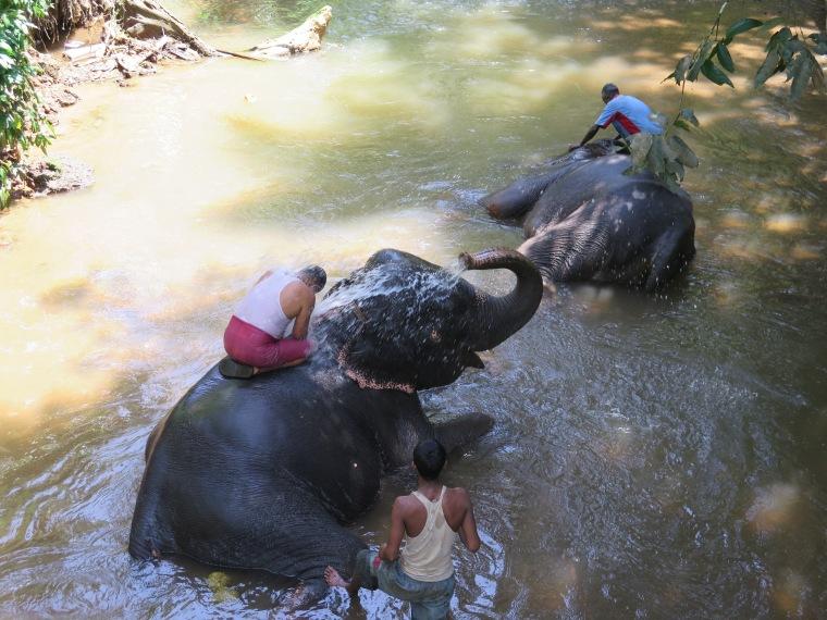 Elefantes bañándose en la granja de especias