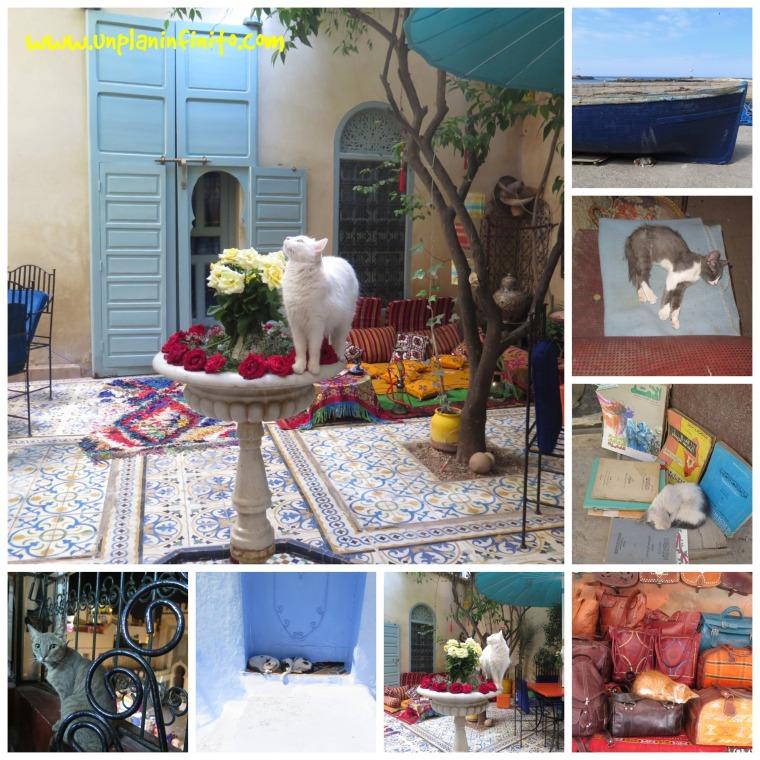Gatos de Marruecos :D