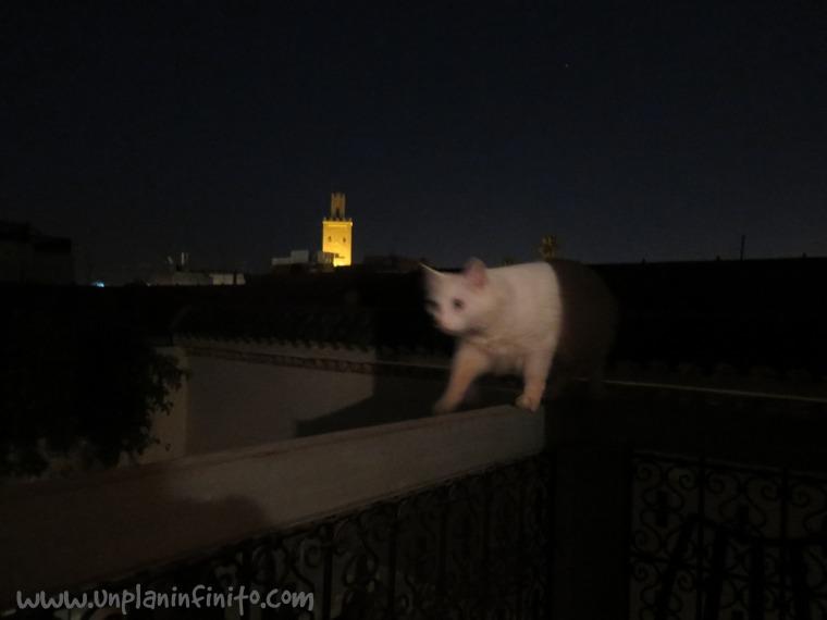 Bobon nos visita por la noche