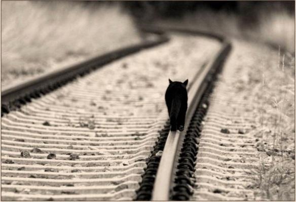 Gato en las vías del tren