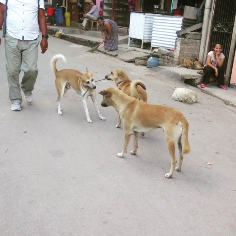 perros nepal