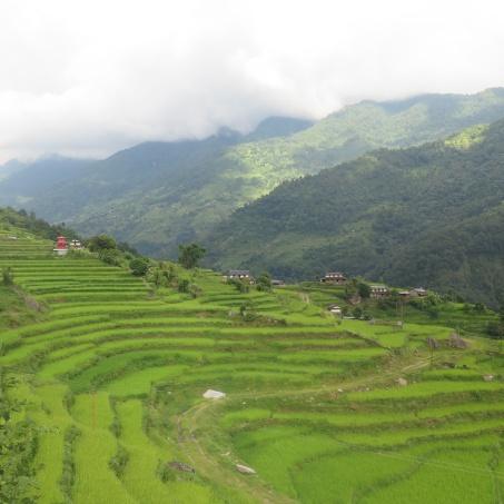campos de arroz, Nepal