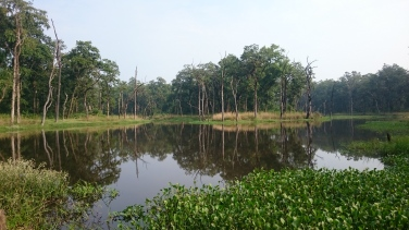 Lagunas del parque
