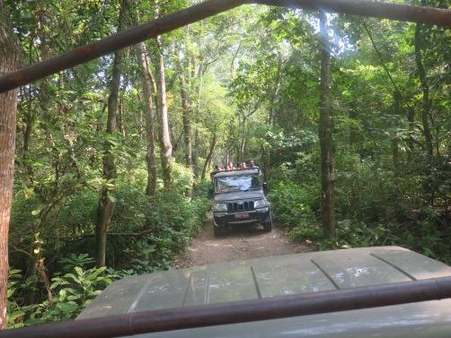 Safari por los alrededors del parque