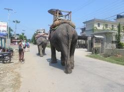 Elefantes por la carretera