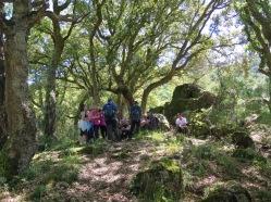 Bosque alcornoques