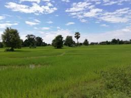 Dondet arrozales