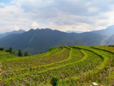 arrozales en terrazas