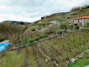 Ribeira Sacra, viñedos